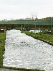 Flobull-water-aerator-3.jpg