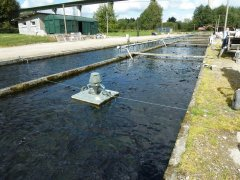 Flobull-water-aerator-6.jpg